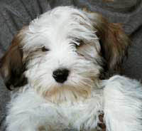 My Puppy Pic