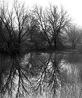 Winter Reflections #2