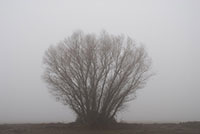 Tree in a field #3, Sacramento-Natomas Area, Ca